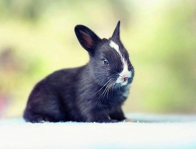 bunny_08