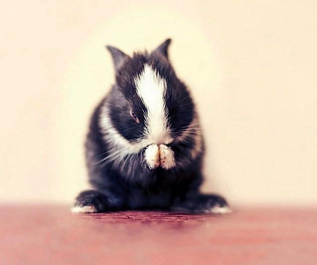 bunny_09